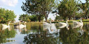Lagoa dos Pássaros