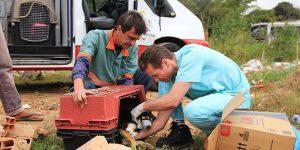 Campinas cria Samu para resgate de animais