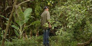 Continua investigação sobre morte de macacos em Mogi Mirim