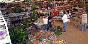Mercados da Ceasa Campinas funcionam normalmente neste feriado
