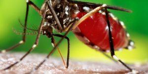 Mogi Mirim confirma novos casos de chikungunya