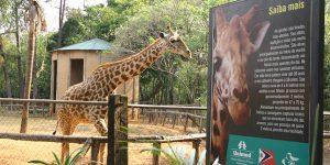 Zoológico de Americana passa a cobrar ingresso
