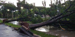 Forte chuva causa estragos em Artur Nogueira