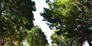 Prefeitura institui política de arborização urbana e paisagística em Artur Nogueira