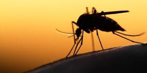 Valinhos confirma 1º caso de febre amarela silvestre