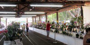 Exposição de Orquídeas integra programação de aniversário de Vinhedo