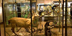 Museu de História Natural de Campinas é destino para toda a família