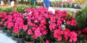Exposição de Flores de Holambra será realizada em Socorro