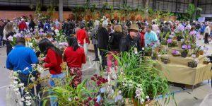 Valinhos recebe 12ª Exposição Nacional de Orquídeas