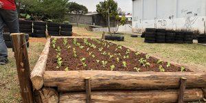 Itatiba recupera programa de hortas comunitárias
