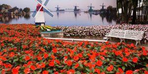 Corrida das Flores em Holambra tem ingressos disponíveis