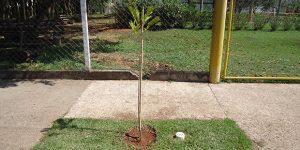"""Jaguariúna recebe incentivo à criação de """"Espaço Árvore"""""""