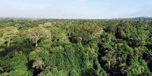 Campinas une-se a movimento global pela preservação de florestas