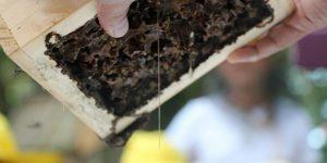 Engenheiro Coelho anuncia plano de fortalecimento da apicultura