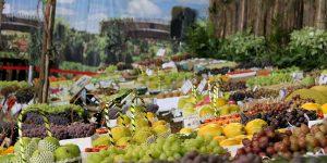 Vinhedo cria canal para sugestões voltadas à 57ª Festa da Uva