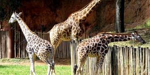 Itatiba tem maior zoológico particular do Brasil