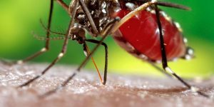"""Mogi Guaçu promove dia """"D"""" de Combate à Dengue"""