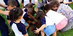 Crianças das escolas municipais cultivam caqui, principal fruta de Itatiba