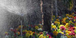 Holambra contribui para que SP seja maior produtor de flores do Brasil