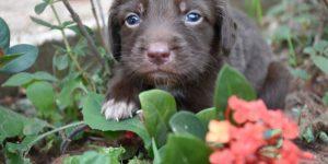 Prefeitura promove campanha de adoção de animais domésticos