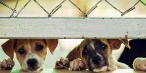 Prefeitura Santo Antônio de Posse abre inscrições para castração de animais