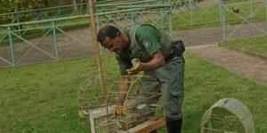 Zoo de Limeira devolve 44 aves à natureza