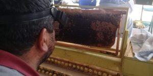 Prefeitura oferece curso de apicultura aos produtores rurais de Jaguariúna