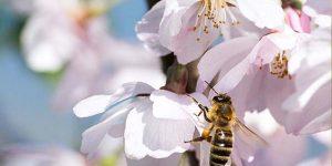 """Pedreira desenvolve """"Programa de conservação de Abelhas e Insetos Polinizadores"""""""