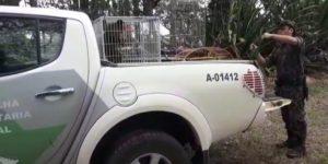 Polícia encontra animais silvestres em cativeiro em sítio de Artur Nogueira