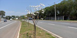 Areá de Preservação Permanente do Ribeirão Tatu em Limeira recebe plantio de árvores