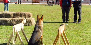 Competição de cães acontece em Paulínia