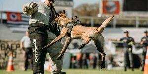 Montem Mor realiza 1° torneio de cães de polícia